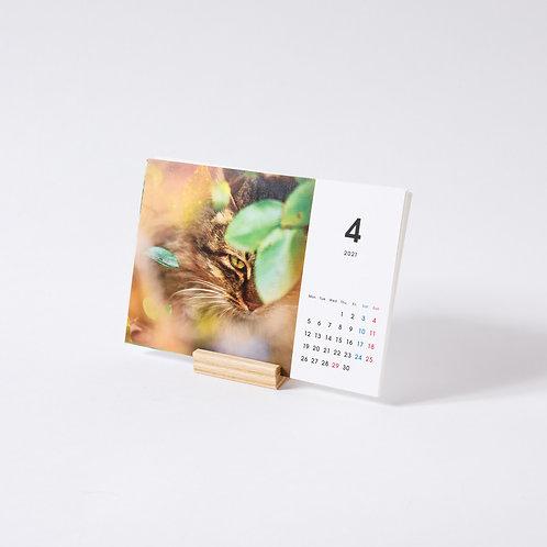 【4月始り】『そとねこたちのポートレート2021カレンダー』