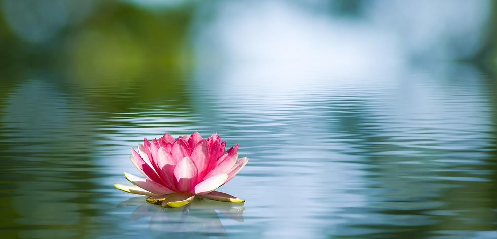 Flor de loto.png