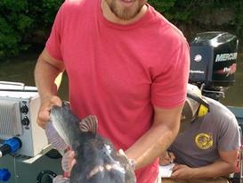 White catfish, the original catfish of the Chesapeake Bay