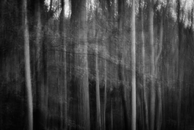 Michele Fletcher (VA), Untitled
