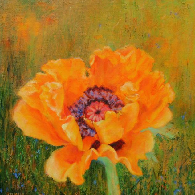 Revelle Hamilton, Orange Poppy