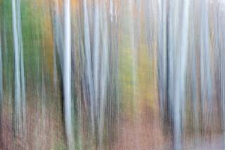 Michele Fletcher (VA), Autumn Ghosts
