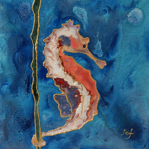 Sophie Adams, Little Seahorse