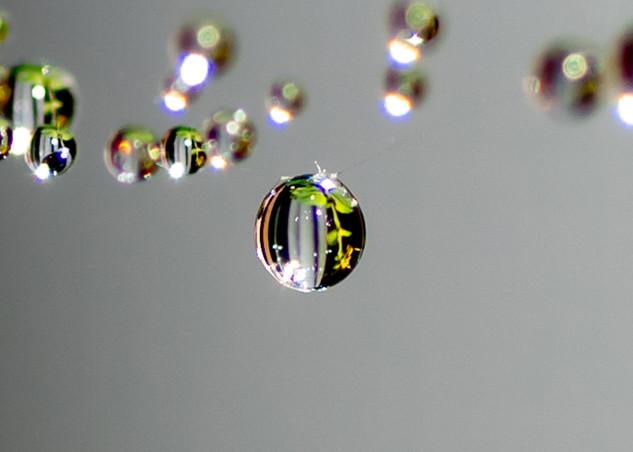 Allison Szuba (VA), Beauty in the Drop