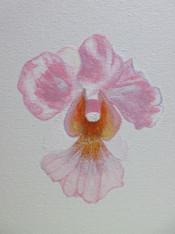 Painter: May Wong