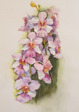 Painter: Tan YB