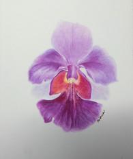 Painter: Goh Ai Hwa
