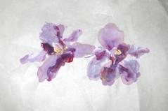 Painter: Lim Wan Ying