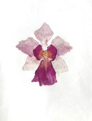 Painter: Wennie Wong