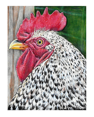Nancy'sRooster.jpg