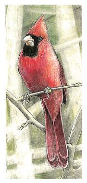 CardinalMaleArt.jpg