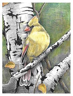 CardinalFemaleArt.jpg