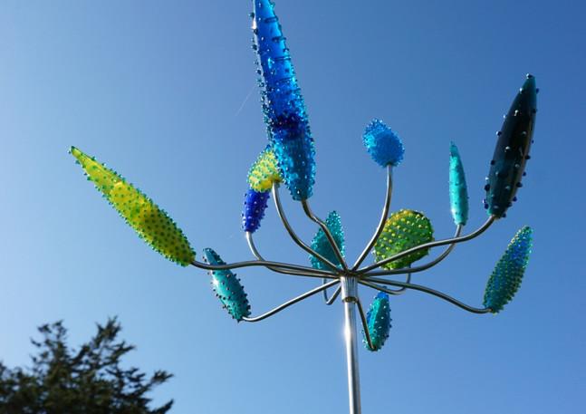 Cactus flower aqua