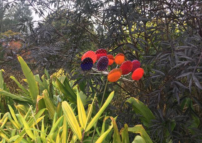 Prickly Pear hot ( photo RHS Rosemoor)