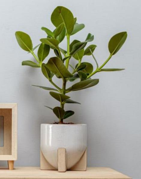 Neutral Plant Pot