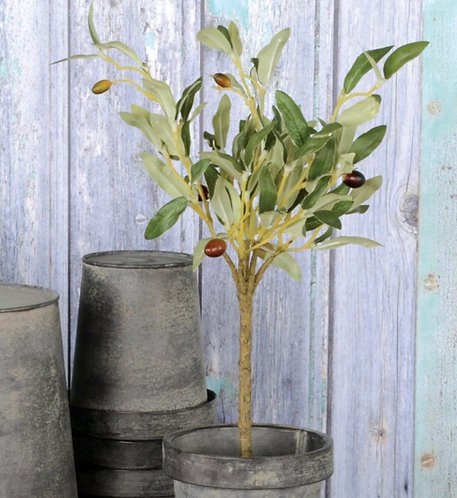 Olive Tree in Pot - 40cm