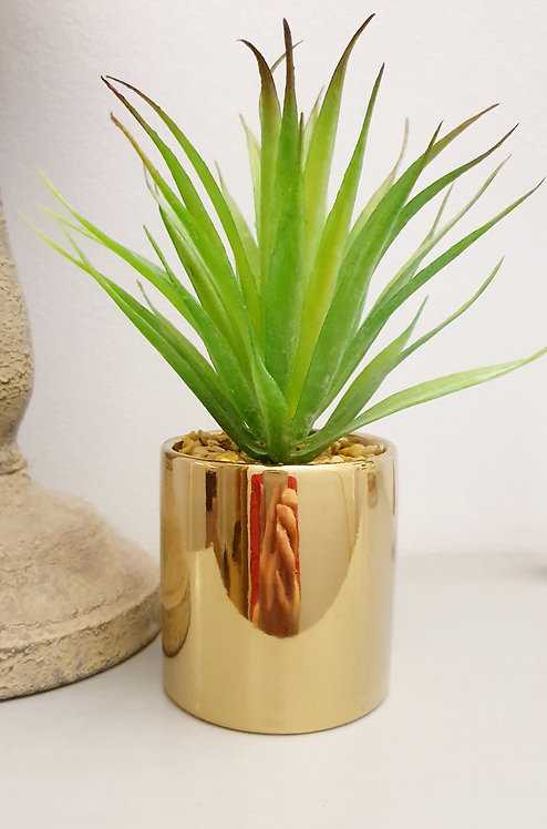 Aloe Vera Succulent in Electroplated Pot Gold