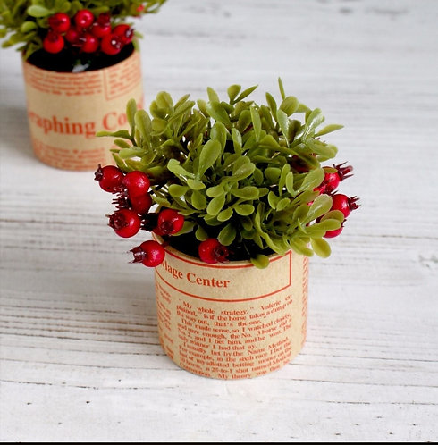 Red Berry Plant in Paper Pot