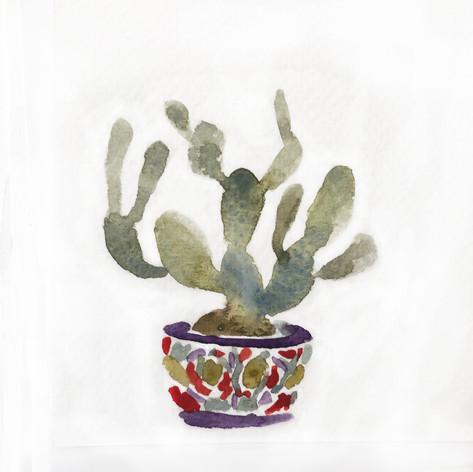 pottedcactus.jpg