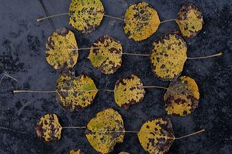 leafpattern2.jpg