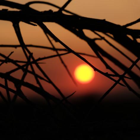 sunsticks3.jpg