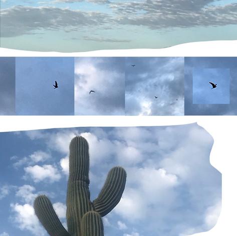 birdflight_desert_sky2.jpg