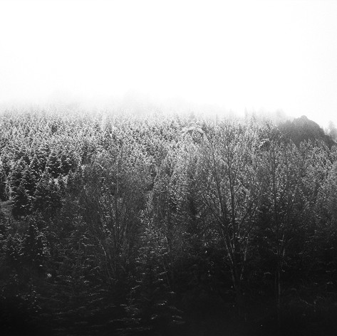series : spring 35mm film