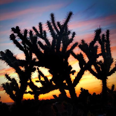 cacti_color.jpg