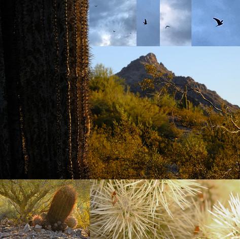 desertgrid.jpg