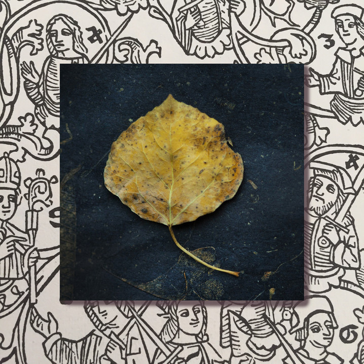 leafking.jpg