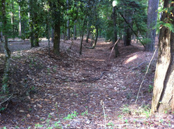 18th century rice berms and ditches