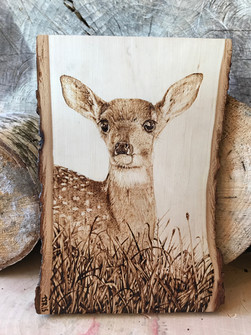 Fawn on Basswood