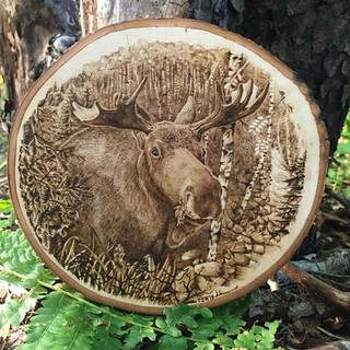 Moose on Birch