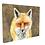 Thumbnail: Red Fox Canvas