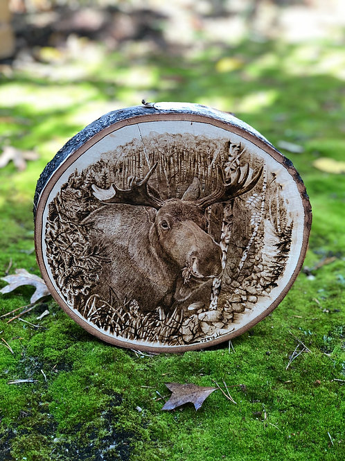 Mighty Moose on Birch