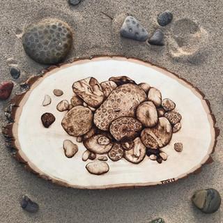 Petoskey Stones on Basswood