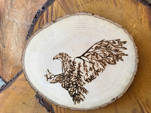Eagle on Basswood
