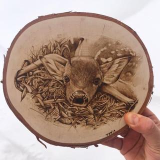 Fawn on Birch