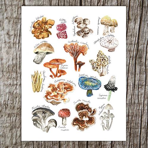 Fungi of Michigan Print by Brush & Bark