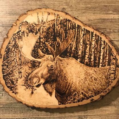 Moose on Basswood