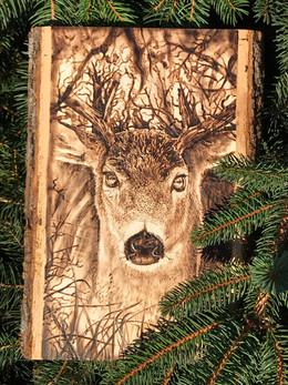 Buck on Basswood