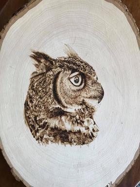 Owl on Basswood