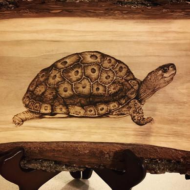 Petoskey Turtle on Walnut