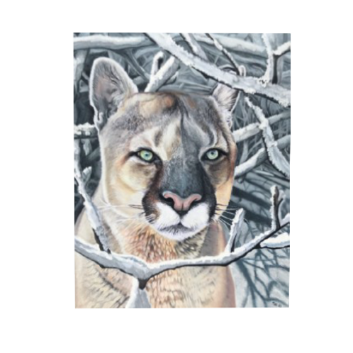 """Cool Cat"" Cougar Canvas"