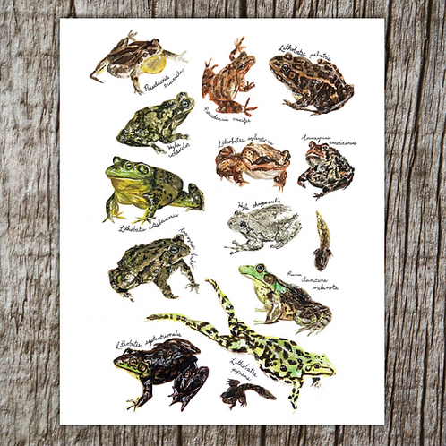Frogs & Toads of Michigan Print by Brush & Bark