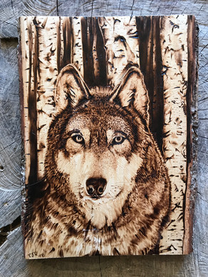Wolf on Basswood