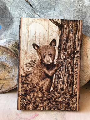Cub on Pine