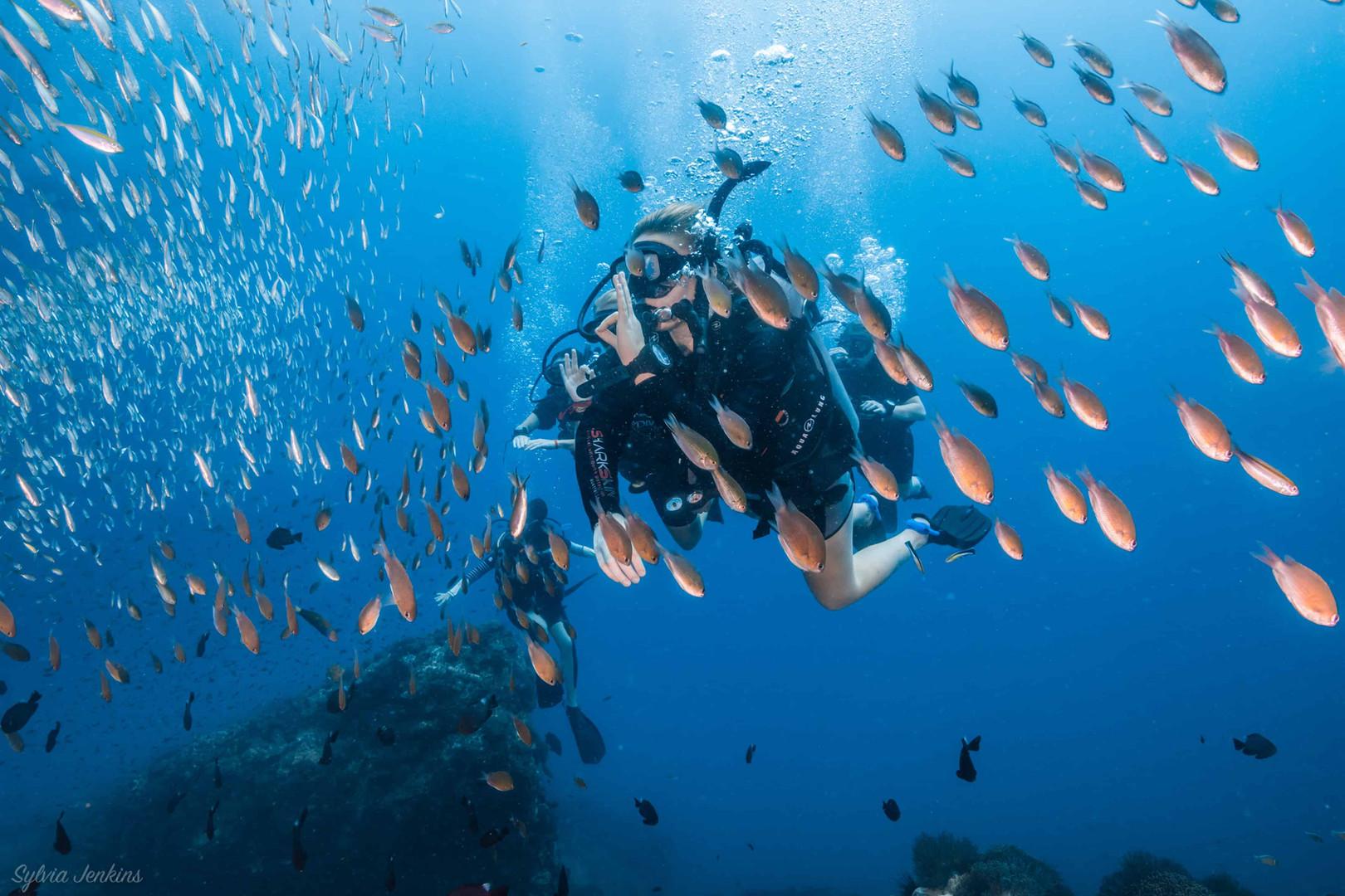 diving kohtao