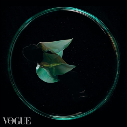 Genome of the Universe in Italian VOGUE