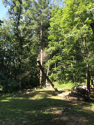 woodsy 5.jpg